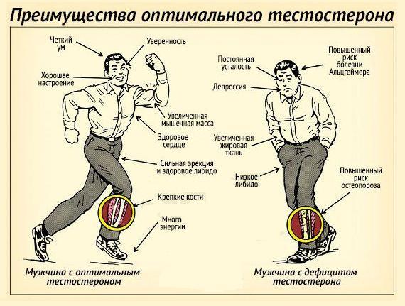 Влияние гормона тестостерона
