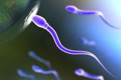 Плохая сперма