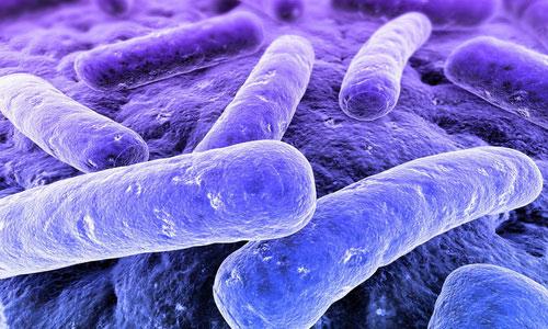 Инфекционные бактерии