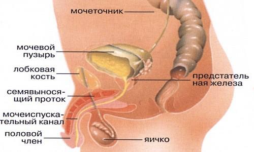 Лечение простатита подмором видео