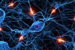 Метаболизм в клетках