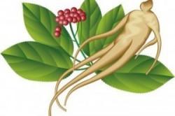 корень женьшеня для потенции рецепт
