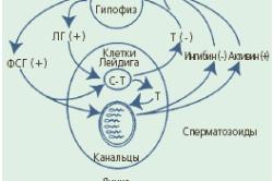 Мужской гипогонадизм