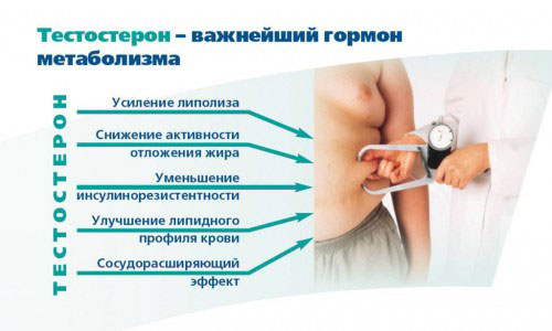 Тестостерон на метаболизмей