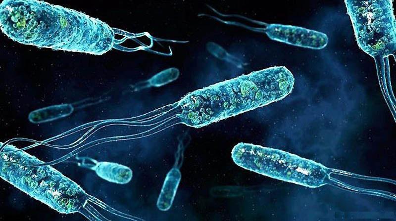 Компьютерное изображение бактерий Enterococcus faecalis