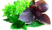 Полезные свойства мартирий для здоровья мужчин