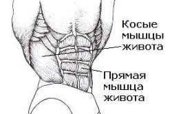Косые и прямая мышцы живота