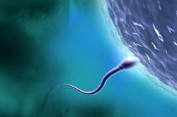 Малоподвижность сперматозоидов