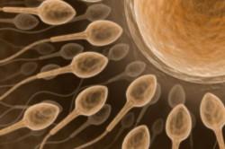 Нормальное продвижение спермы