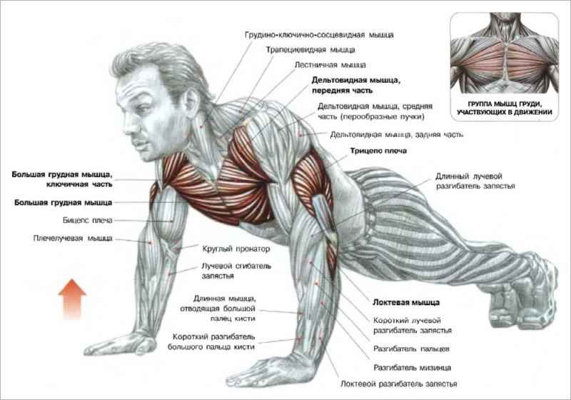 Как накачать мышцы руки в домашних условиях