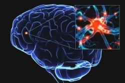 Влияние оргазма на мозг
