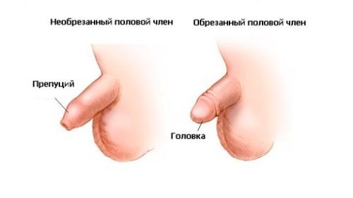 Обрезанный и необрезанный пенис