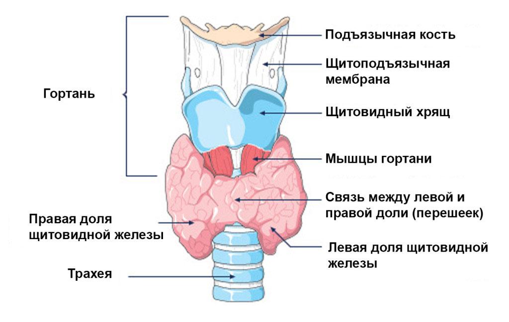 Схема гипертиреоза