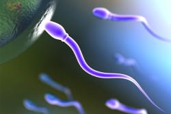 Здоровые сперматозоиды