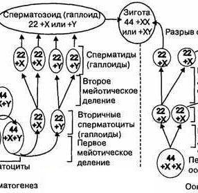orgiya-domashnyaya