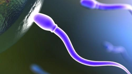 Повышение подвижности сперматазоидов