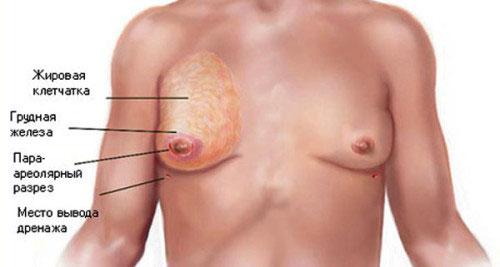 Анатомическое строение мужской груди