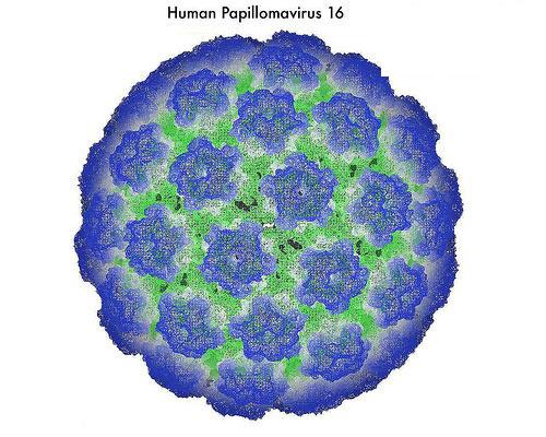 ВПЧ 16 входит в категорию повышенного риска онкологических заболеваний