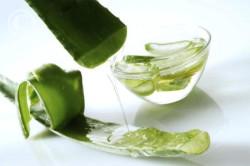 Сок каланхоэ для лечения простатита