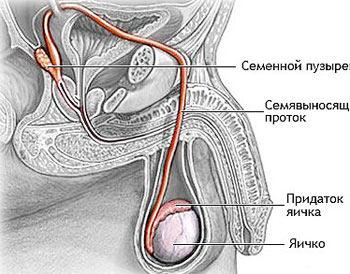 mashonka-u-muzhchini-foto