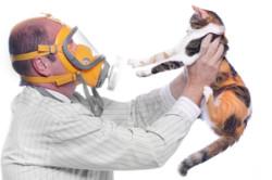 Причина высыпаний на головке - аллергия на домашних животных