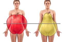 Типы распределения жира