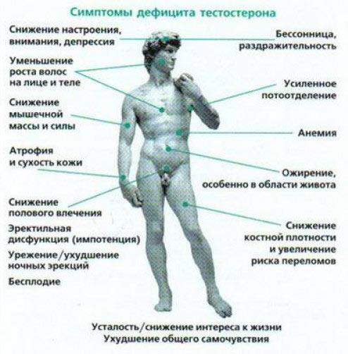 vliyanie-seksa-na-mishechnuyu-massu