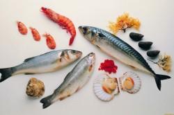 Морепродукты для повышения тестостерона