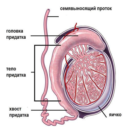 Темная сперма