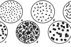 Взаимные расположения кокков: а - микрококки; б - диплококки; в - стрептококки; г - тетракокки; д - стафилококки; е - сарцины