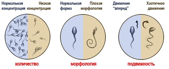 Кокого цвета сперма