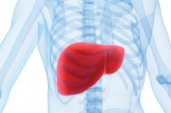 Болезнь печени влияет на возрастание СОЭ в крови