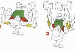 """Рисунок 1. Порядок осуществления упражнения """"жим гантелей лежа"""""""