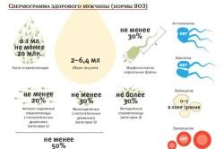 Спермограмма здорового мужчины (нормы ВОЗ)