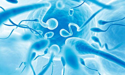 Здоровые сперматозоиды под микроскопом