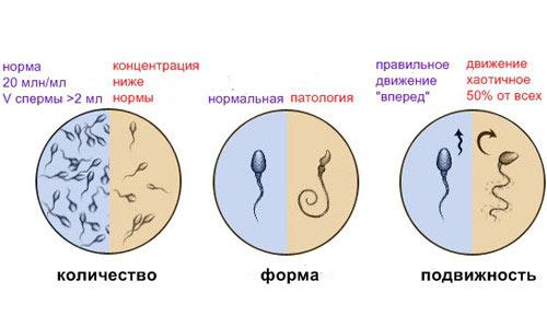 Препараты увеличивающие активность сперматозоидов