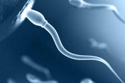 Оплодотворение яйцеклетки сперматозоидом