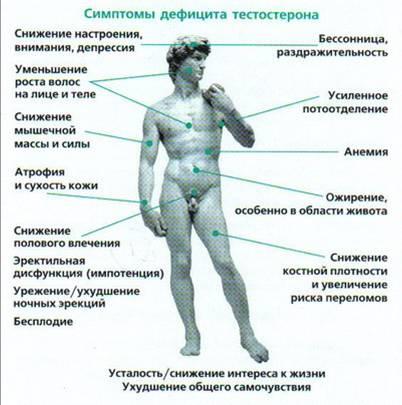 тестероны у мужчин