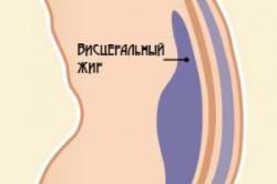 Расположение висцерального жира