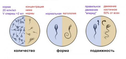 Норма спермотазидов