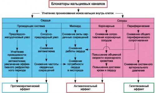 Действие блокаторов кальциевых каналов