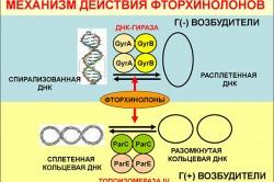 Механизм действия фторхинолонов
