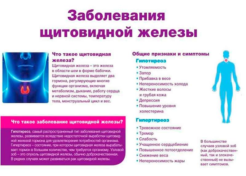 термобелья заболевания щитовидной железы симтомы лечение мериноса