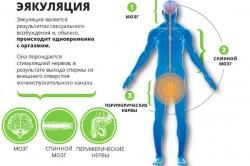 Особенности эякуляции
