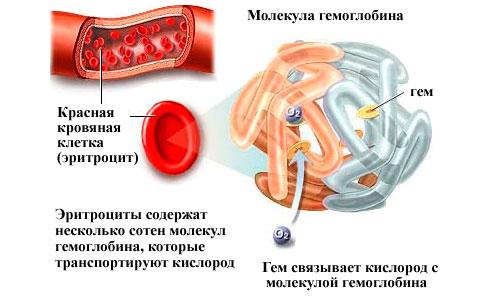 Уровень гемоглобина в крови норма у мужчин