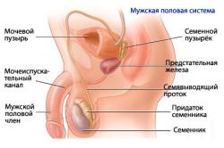 Причина плохой подвижности сперматозойдов