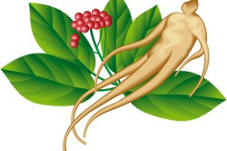Корень женьшеня - натуральный возбудитель