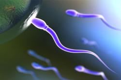 Подвижность сперматозоидов