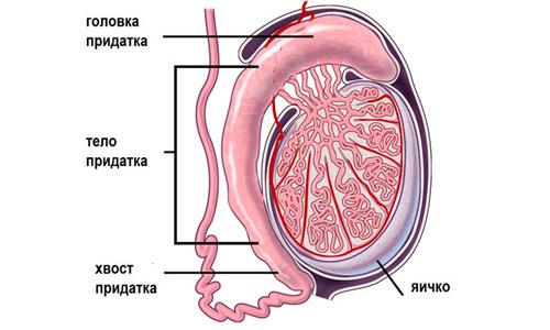 Воспаление семенного канатика