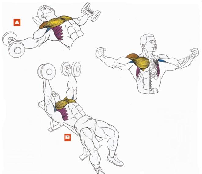 Как накачать крылья в домашних условиях без гантелей